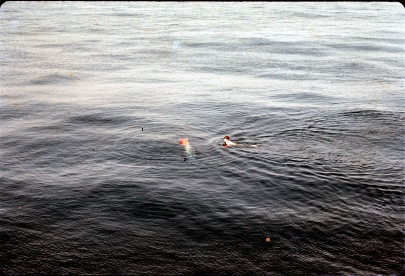 slide 4 Firing practice torpedo at a sub swimmer recovery 1969